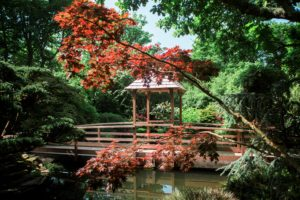 Japanese garden lake in Cornwall