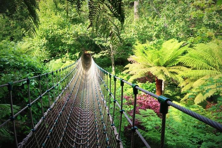 Lost Garden of Heligan jungle bridge