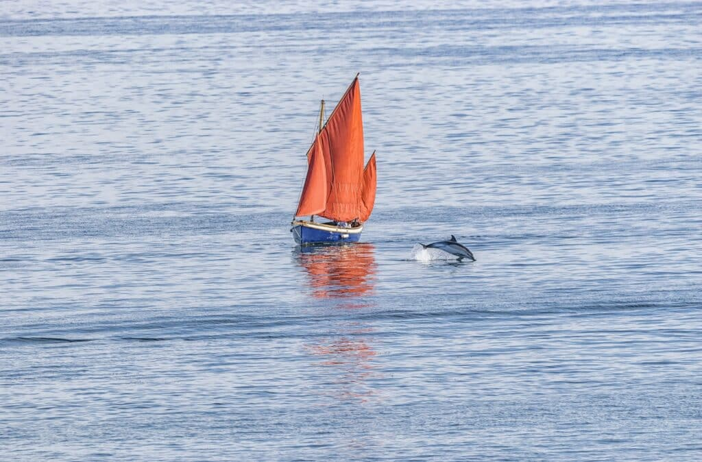 Dolphin playing in Cornwall