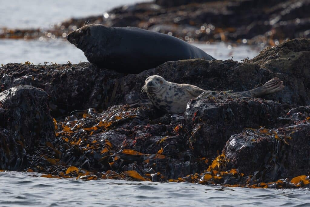 Seals in Cornwall