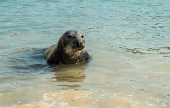 What wildlife can you see in Cornwall
